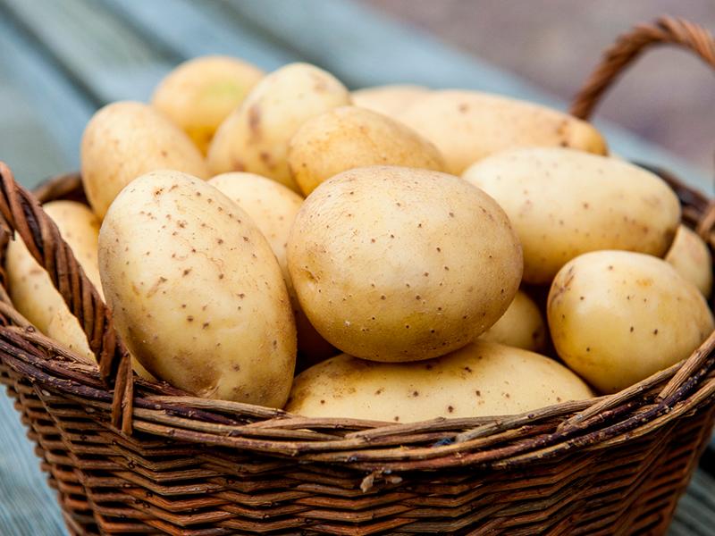 Когда садить картофель?